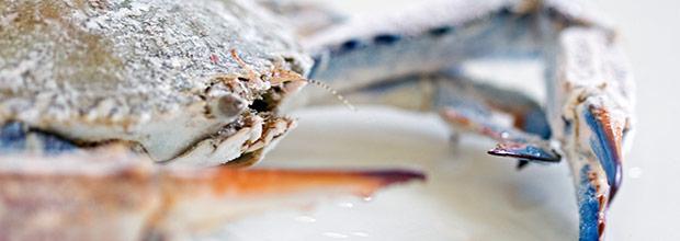 Northern Star Seafood Banner