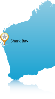 Location of Shark Bay